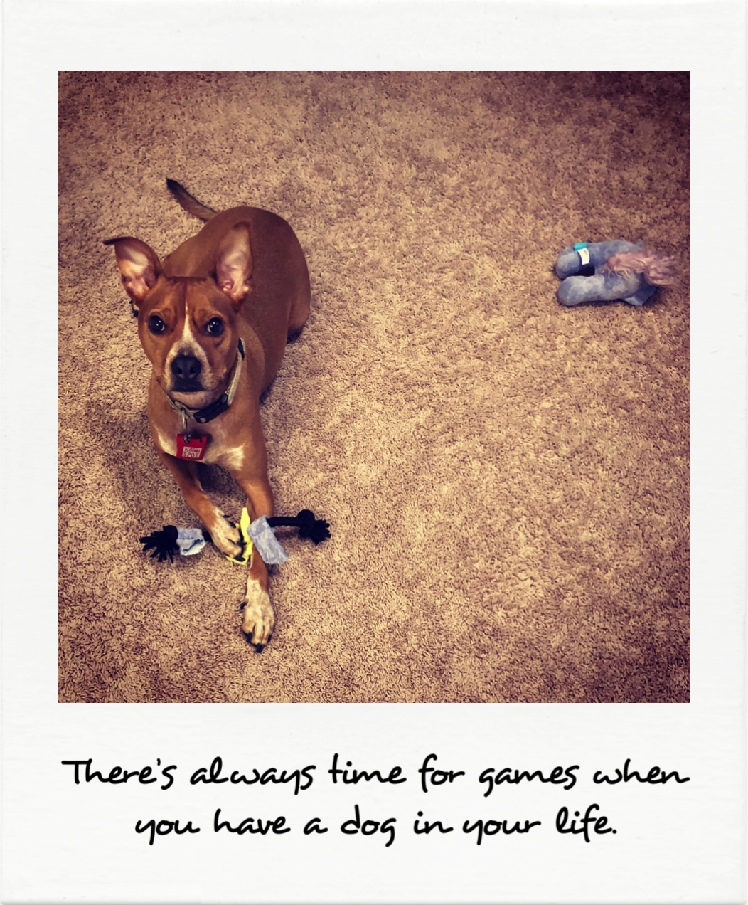 There's always time for games when you have a dog in your life
